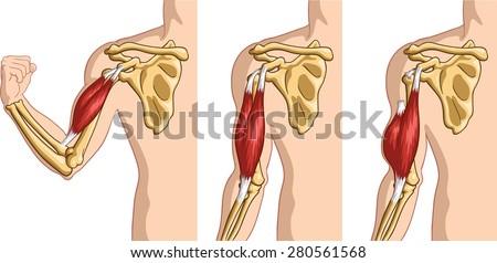vector illustration human arm tendon 450w 280561568 diagram human arm tendons wiring diagram