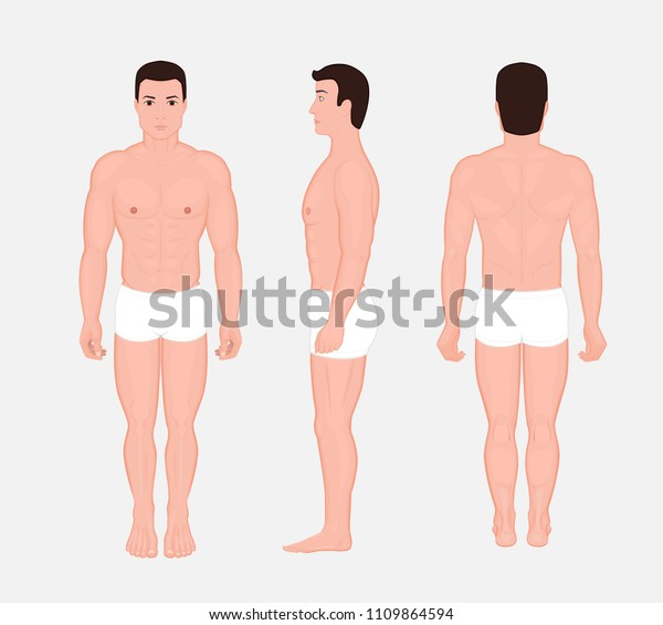 vector illustration human body anatomy front stock vector royalty free 1109864594 https www shutterstock com image vector vector illustration human body anatomy front 1109864594