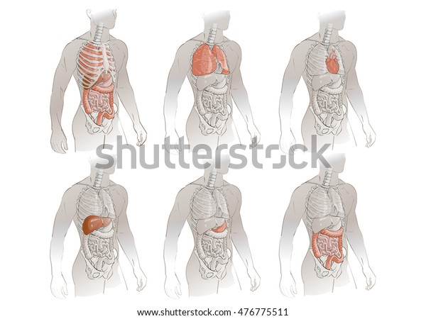 vector illustration human body anatomy medical stock vector royalty free 476775511 shutterstock