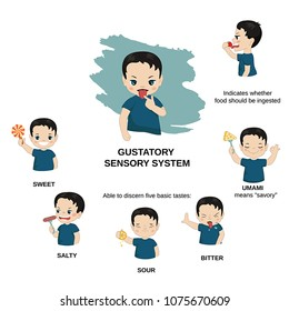 Vector illustration of human senses. Gustatory sensory system: able to discern five basic tastes - bitter, umami, sour, salty, sweet.