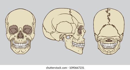 Human Teeth Images Stock Photos Vectors Shutterstock