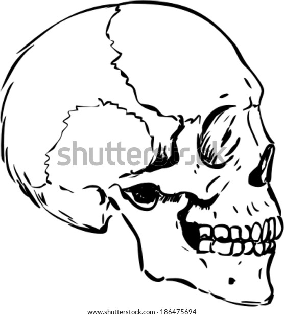 Human Skull Profile Drawing
