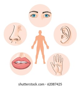 vector illustration, human's five senses, education concept, white background.
