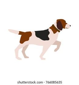 Vector illustration of hunter dog isolated on white background