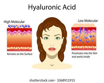 Vector illustration with Hyaluronic acid in skin-care products. Low molecular and High molecular. isolated