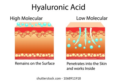 Vector illustration with Hyaluronic acid in skin-care products. Low molecular and High molecular.