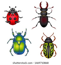 Vector illustration with insect beetles. Set isolated on white background. Ladybird, beetle deer, green beetle, calligrapha serpentina