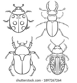 Vector illustration with insect beetles. Set in line art style isolated on white background. Ladybird, beetle deer, green beetle, calligrapha serpentina. Coloring book page