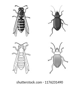 Vector illustration of insect and fly symbol. Set of insect and element stock vector illustration.