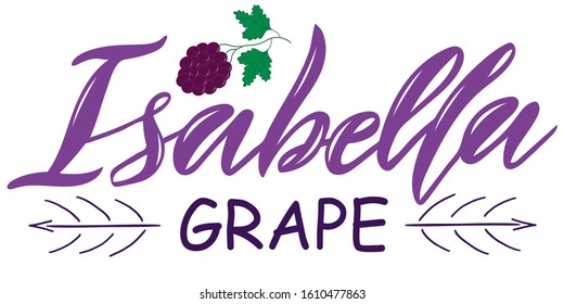 Vector illustration of Isabella Grape text for logotype, t-shirt, banner, magazine, poster, decoration, postcard. Isabella Grape calligraphy background. Isabella Grape lettering. EPS 10.