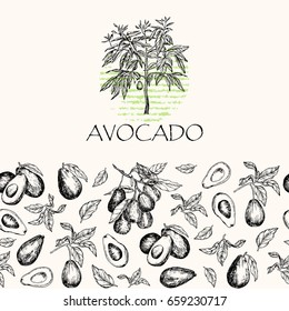 Vector illustration. Isolated avocado fruit tree, avocado leaves and branches. Element of seamless pattern.