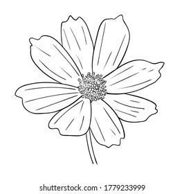 Vector illustration, isolated cosmos flower in black and white colors, outline original hand painted drawing