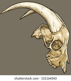 Vector illustration of an isolated goat skull (profile view). Black line work has been grouped separately from color (which has also been grouped).