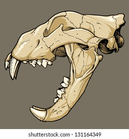 Vector illustration of an isolated lion skull (profile view). Black line work has been grouped separately from color (which has also been grouped).