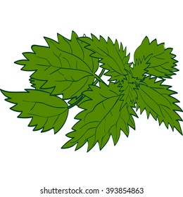 Vector illustration of isolated nettle leaves. Monochrome graphic:  shades of green. Hand drawing.