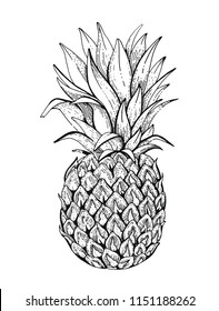 Vector illustration isolated on white background. Realistic food drink symbol, 3d hand drawn pineapple fruit. Cartoon cute doodle ananas ink sketch drawing icon. Retro flat sign, engraved tatoo art