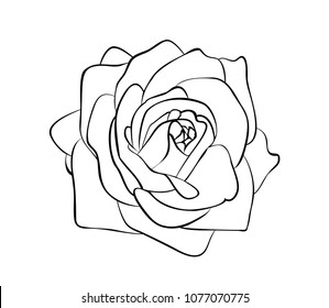 Vector illustration, isolated rose flower in black and white colors