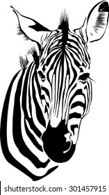 vector illustration of isolated zebras head on white background