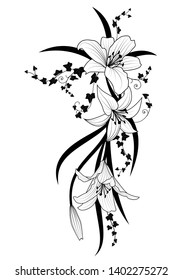 Vector illustration with ivy and flowers of lily in black and white colors