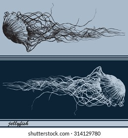 Vector illustration with jellyfishes. Hand drawn by ink.
