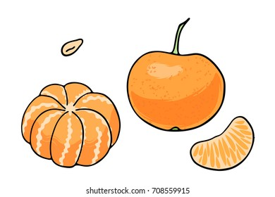 Vector illustration of juicy isolated outline colorful fruit - mandarin, tangerine.