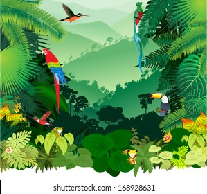 Vector Illustration Jungle Rainforest with Frog, Toucan, quetzal, humming-birds and Ara