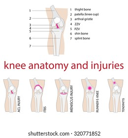 vector illustration of knee anatomy and injuries