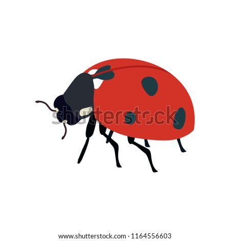 vector illustration ladybug on white isolated stock vector royalty