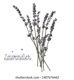 Vector illustration of a lavender bouquet on a white background
