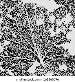 Vector illustration of leaf veins, leaf skeleton. Abstract black & white background. Autumn.