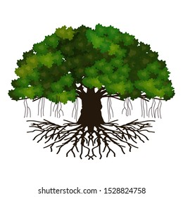 Vector illustration of a leafy tree. banyan tree roots. mangrove plants. set of branches with a white background