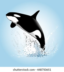Vector illustration of a leaping orcas