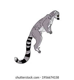 Vector Illustration of a lemur isolated by a liner. Lemur cata for printing on a printer, blank for designers