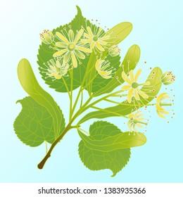 Vector illustration of a linden branch.