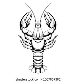 Vector illustration of lobster.