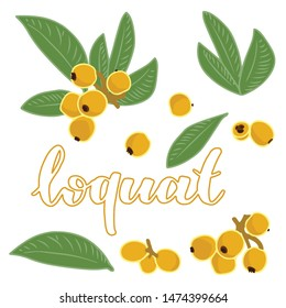 vector illustration of loquat and leaf design isolated with lettering loquat background white and fruit EPS10