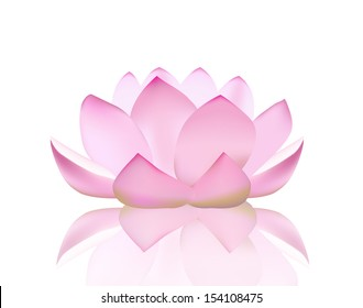 vector illustration of a lotus flower isolated on white