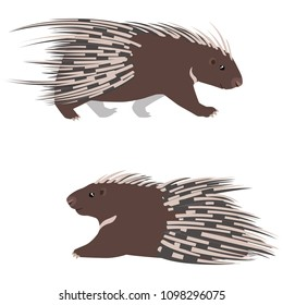 Vector illustration of lying and walking cape porcupines isolated on white background