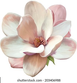 Vector Illustration of a magnolia flower isolated on white background