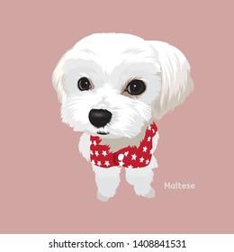 Vector illustration of Maltese Dog puppy