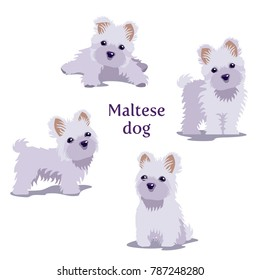 Vector illustration of Maltese Dogs puppies in different poses isolated on white background.