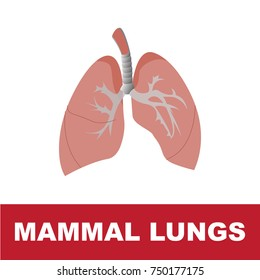 vector illustration of mammal schematic lung anatomy. perfect for educational purpose