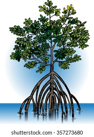Vector illustration of mangrove plants, which commonly grows on a tropical beach.
