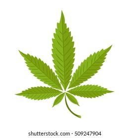 Vector illustration of marijuana leaf