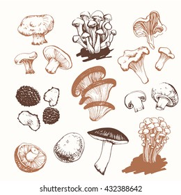 Vector illustration with mushrooms: shiitake, chanterelle, honey in sketch style on white background. Fresh organic food.
