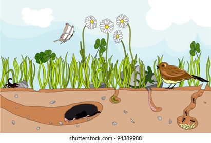 Vector illustration of a nature underground with insect and little animal