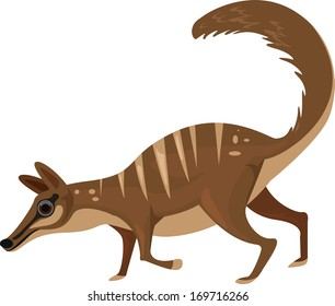 Vector illustration of a numbat