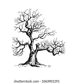 Vector illustration of an old tree without any leaves. Hand drawn in a graphic style with a pen and ink technique.