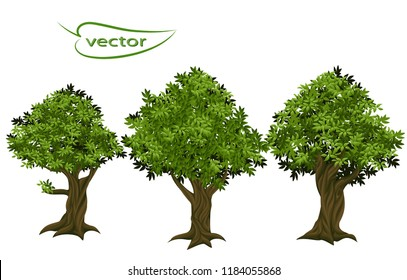 Vector illustration of old trees from a fairy tale in bright green leaves, textured oak tree trunk with embossed bark