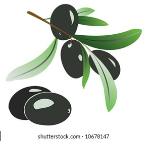 Vector illustration of olive branch with black olives on white